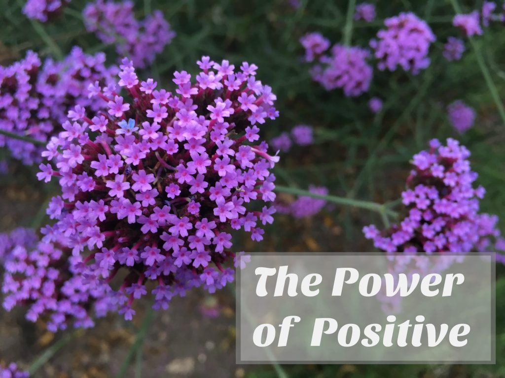 purple flowers, positive